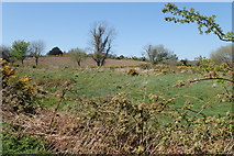 J3633 : Rough pasture on the north side of Wild Forest Lane by Eric Jones