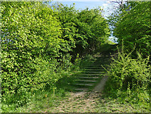 SE2635 : Kirkstall Valley Nature Reserve: steps to the meadow by Stephen Craven