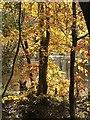 NY1421 : Lanthwaite Woods in Autumn by Sharon Leedell