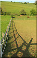 SX8970 : Fence, Haccombe Farm by Derek Harper