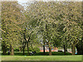 SE2733 : Armley Park: exercising a horse by Stephen Craven