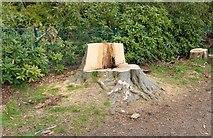 NO3901 : Tree stump seat by Bill Kasman