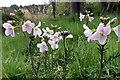 NZ1365 : Cuckoo-flower (Cardamine pratensis), Close House by Andrew Curtis