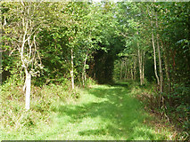 SU8216 : Footpath in Phillis Wood by Robin Webster