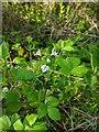 TF0820 : Cuckoo Flower by Bob Harvey