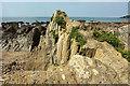 SX6643 : Rocks north of Butter Cove by Derek Harper