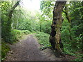 TQ4577 : The Green Chain Walk on the way to Bostall Woods by Marathon