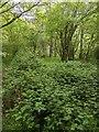TF0820 : Greening up  by Bob Harvey