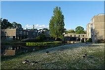 SE6250 : Derwent College and Lawns by DS Pugh