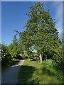 SE4036 : Barwick-in-Elmet community orchard by Stephen Craven
