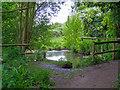 TQ5685 : Water Body in Cranham Marsh Nature Reserve by Roger Jones