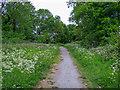 TQ5785 : Footpath near Spring Wood, Cranham Marsh Nature Reserve by Roger Jones