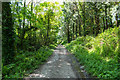 SW9247 : Leafy country lane by Mike Lyne