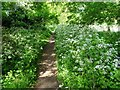 SO7742 : Footpath and cow parsley by Philip Halling