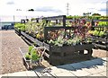 TG3002 : Plants for sale at Green Pastures garden centre by Evelyn Simak