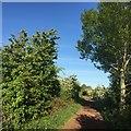 NT4576 : Haddington railway path, Longniddry by Richard Webb