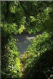 SX9364 : Path meeting Ilsham Road by Derek Harper