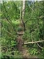 TF0820 : The path through the tree by Bob Harvey