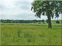 TR2951 : Fields north of Beeches Farm by Robin Webster