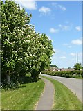 SK6835 : Horse chestnut in blossom by Alan Murray-Rust