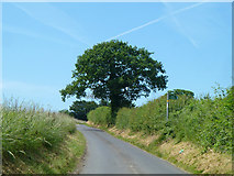 TR2754 : Lane towards Goodnestone by Robin Webster