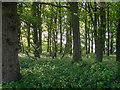 TL5002 : Wood near bridleway, Mill Lane, Toot Hill by Roger Jones