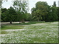 SE3219 : Daisies near the lake, Thornes Park, Wakefield by Christine Johnstone
