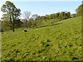 TR2043 : Meadow above Ladwood Farm by John Baker