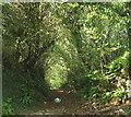 SX5654 : Sunken lane near Wiverton by Derek Harper