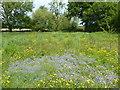 TQ6146 : Wildflower meadow near Tudeley by Marathon