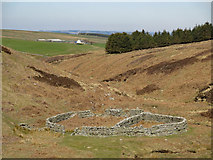 NY8753 : Sheepfold below Washpool Hill by Mike Quinn