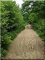 TF0820 : Rutted path by Bob Harvey