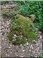 TF0820 : Mossy stump by Bob Harvey