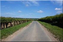 SE7388 : Kirkgate Lane towards Lastingham by Ian S