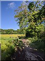 TF0820 : Trees in the Hedge by Bob Harvey