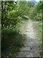 SE3624 : Path on the riverbank near Bottomboat Reach by Christine Johnstone