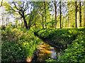 SJ7251 : Basford Brook in Burrow Coppice by Scott Robinson