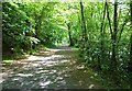 NO2601 : Leafy woodland walk by Bill Kasman