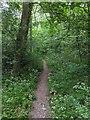 TF0820 : side path by Bob Harvey