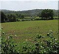 ST3193 : View from a Caerleon Road bench, Llanfrechfa, Torfaen by Jaggery
