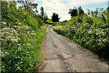 H6056 : Overgrown verges along Crew Road by Kenneth  Allen