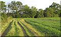 TL5306 : Field margin near New Farm, Bobbingworth by Roger Jones
