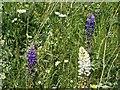 SK6143 : Gedling Country Park Wildlife – 8 by Alan Murray-Rust