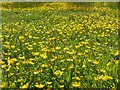 SK6143 : A blanket of buttercups by Alan Murray-Rust