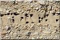 NJ3360 : Sand Martin Colony by Anne Burgess