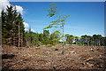 NH6353 : Cleared area of Shantullich Wood by Julian Paren
