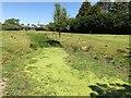 TL4457 : Algae covered ditch on Coe Fen, Cambridge by Richard Humphrey