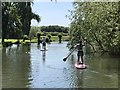 TL4457 : Paddle boarders on The River Cam by Richard Humphrey