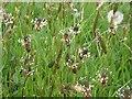 SP2964 : Spring wildflowers in St Nicholas Park, Warwick by Robin Stott