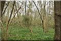 TQ6139 : Woodland south of Cornford Rd by N Chadwick